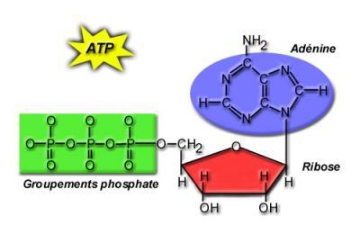 Dextrometorfano metabolismo